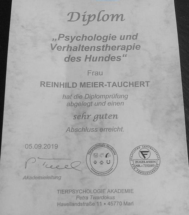 Am 14. Oktober wurde mir gemäß §11 Abs. 1 Satz 1 Nr. 8 Buchstabe f TierSchG die Erlaubnis für die Ausbildung von Hunden für Dritte und die Anleitung der Ausbildung von Hunden durch den Tierhalter vom Veterinäramt Siegen gewährt.